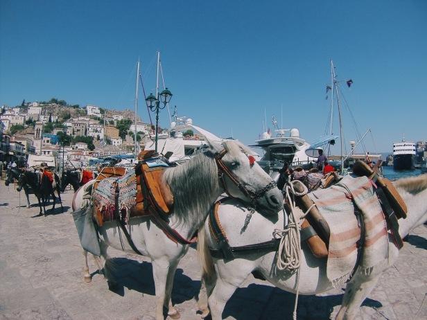 Los burros de carga en la isla