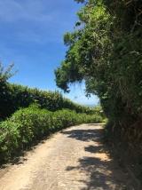 Camino a la Playa Azeda